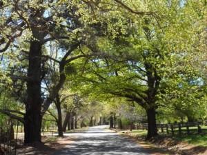Beyers Avenue in Spring